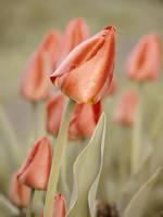 Spring tenderness by OlgaCherkasova