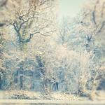 Winter Wonderland. by shelleyytamaraa