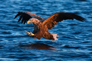 A Catch At Sunset by joeelway