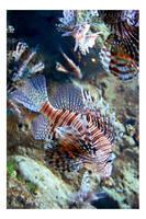 Lionfish by neokeia