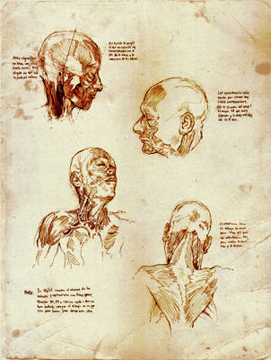 Anatomy Studies from Yokochi's by SILENTJUSTICE