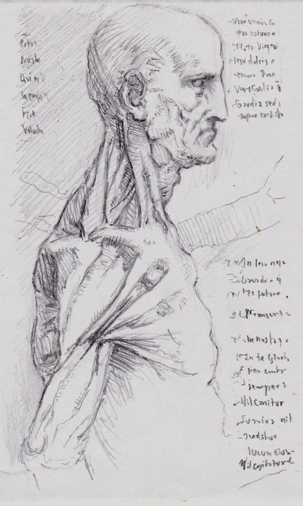 Study From Da Vinci Anatomy Sketch 1 By Silentjustice On Deviantart
