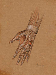 Hand study by SILENTJUSTICE