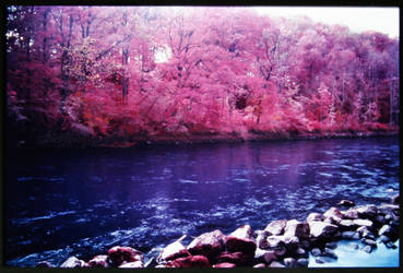 Colour Infrared 191007-1 by helohe