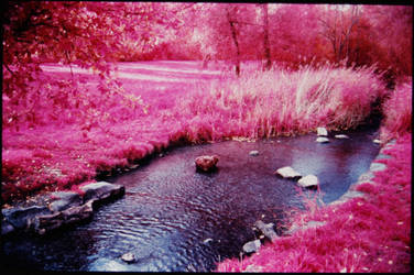 Colour Infrared 191007-2 by helohe