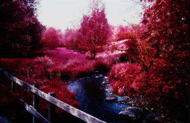 Colour Infrared 191007-3 by helohe