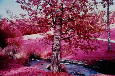 Colour Infrared 191007-5 by helohe