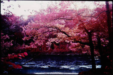 Colour Infrared 191007-6 by helohe