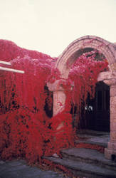 Colour Infrared Greece 6 by helohe
