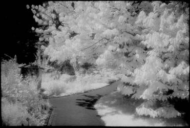 Infrared 190707-1 by helohe