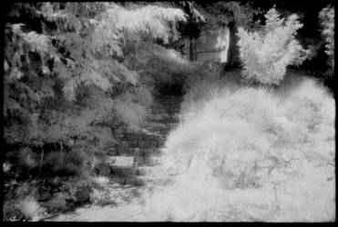 Infrared 190707-2 by helohe