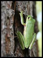 Flipping frog by Alabamaphoto