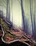 Foggy Path Roots by djwwinters