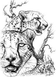 Speckled - cheetah by donnaquinn