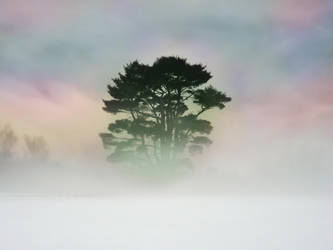 Rainbow Tree by aurionPhoG