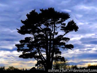 Big Tree by aurionPhoG