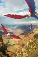 Wild Braviary in the Air by Ninja-Jamal