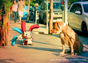Wild Minun and Plusle on LA street by Ninja-Jamal
