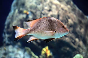 Fish :) by freemax