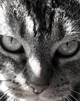 CAT by AvalonSky