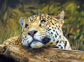 Leopard by DryJack