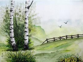 Birches by czajka