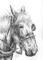 Horse 1 by czajka