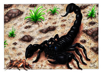 Black Scorpion hunting by RobertoBonelli