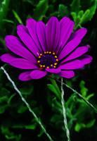Purple Love by Kami-no-kuroi-namida