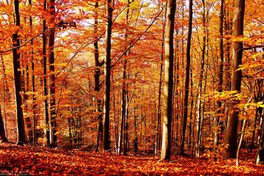 Autumn by joannacora
