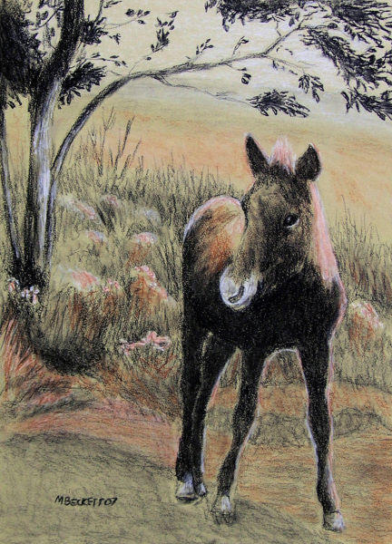 Young Colt by mbeckett