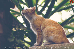 Curiosity by jadesoulrush