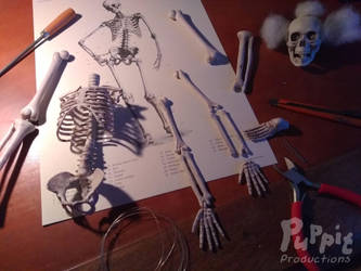 Skeletal preparations by PuppitProductions