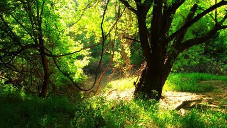 Near the Creek by moodyblues