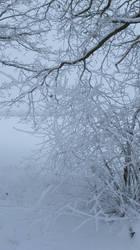 Winter 2010 by JSaurer