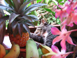 Kauai Kitty by HeedingTheCall