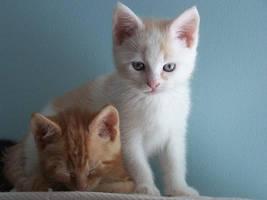 cats by Cainamoon