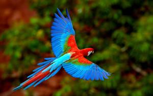 Bird by Mustafa-Malik