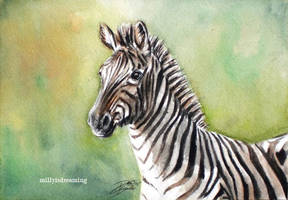Zebra by the-frozen-bunny