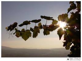 Vineyard Sundown by theuni