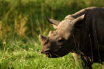 Eastern black rhinoceros calf Sudan by DarkTaraArts