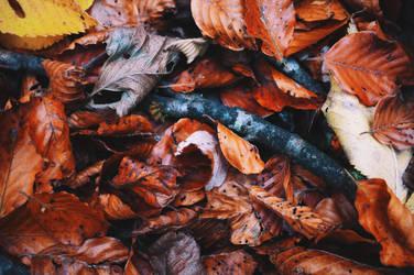 Fall Bottom by Swissvoice
