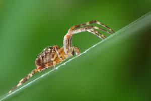 Spider by MadMan1291