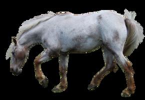 Appaloosa Precut Horse by et-hem