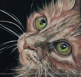 My Green Eyes... by Acacia13