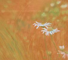 Summer by Acacia13
