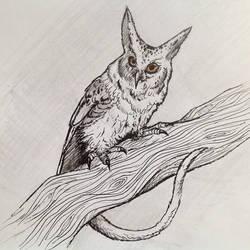 owlcat by minffee
