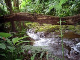 Natures Bridge 2 by CRStock