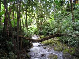 Natures Bridge 3 by CRStock