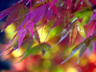 colors by Kazutaka-A
